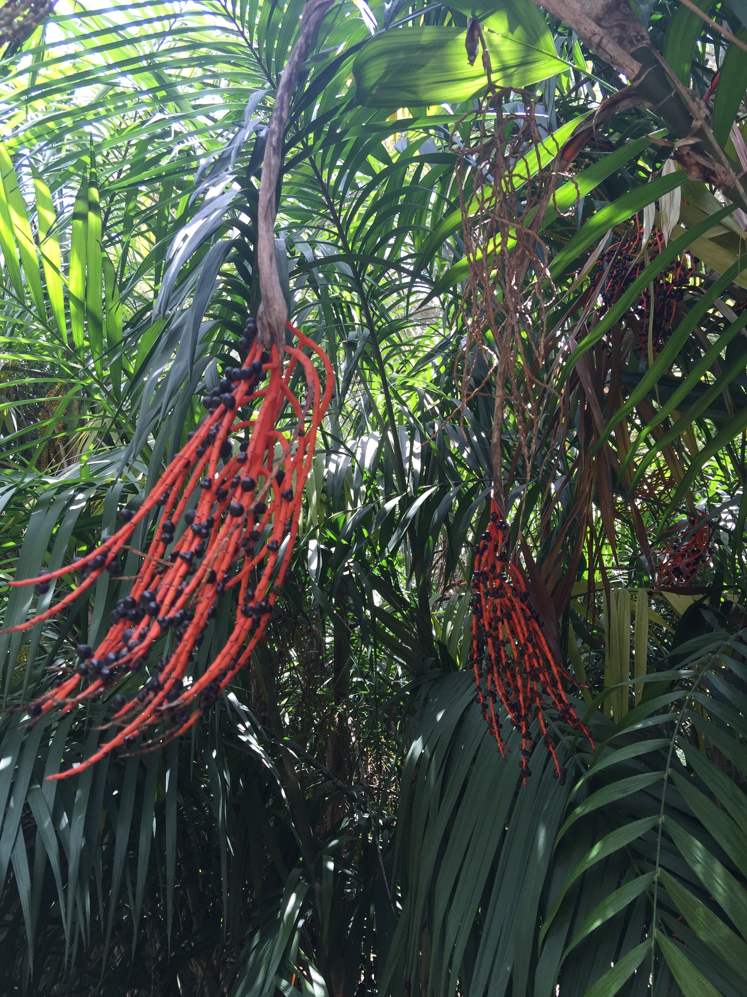 One of the to-be bronzed plants from The Lotusland Garden